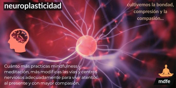 neuroplasticidad1